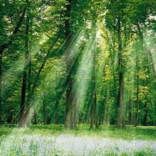 MONTIBUS Hacia aquellos bosques de inmensidad