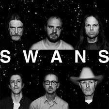 Swans-2012-Dennis-van-Doorn